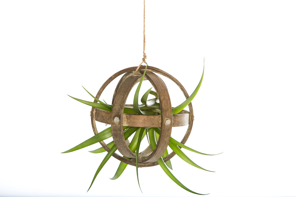 Wood Sphere Air Plant Hanger -  With Plant