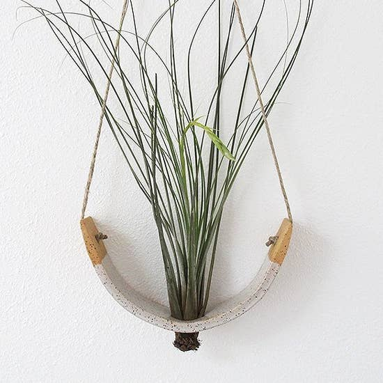"Air Plant Cradle ""Buff"" Large - With Plant"