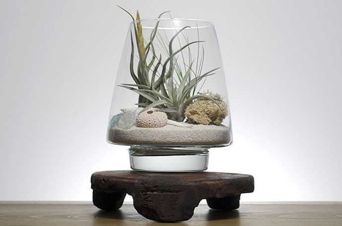 Seaside Terrarium Kit