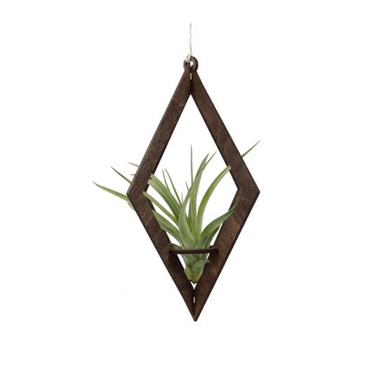 Diamond Walnut Tillandsia Hanger - With Plant