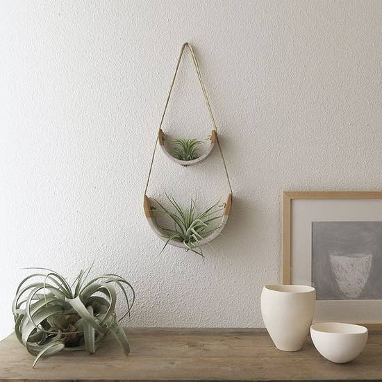 "Air Plant Cradle ""Buff"" Small - With Plant"