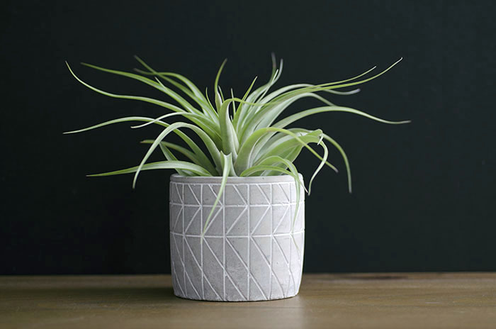 "Concrete Planter ""Geometric"" - With Plant"