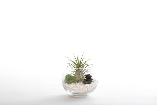 Zen Stacked Stone Terrarium Kit - Small