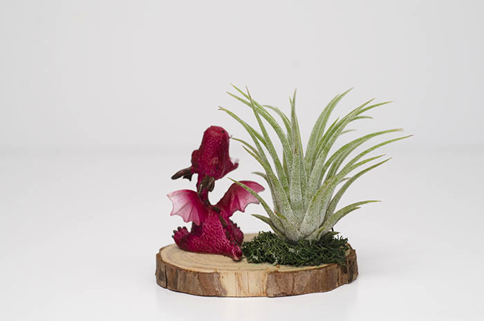 Roaring Baby Dragon Arrangement - Red