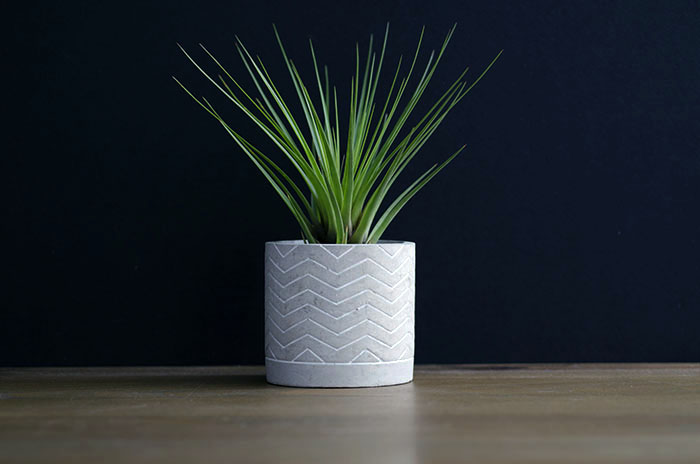 "Concrete Planter ""Chevron"" - With Plant"