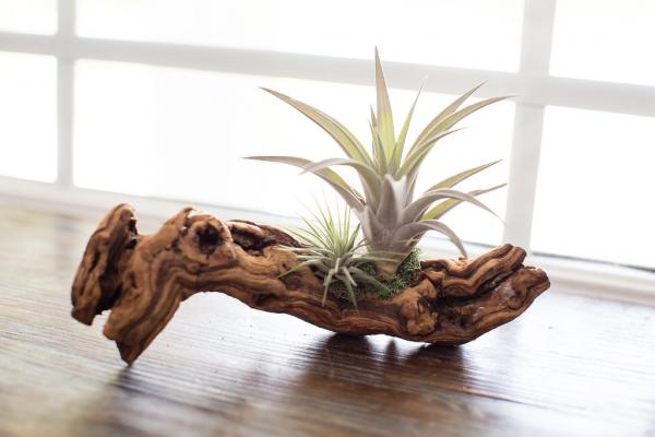 Air Plant Grapevine Wood Arrangement - Small