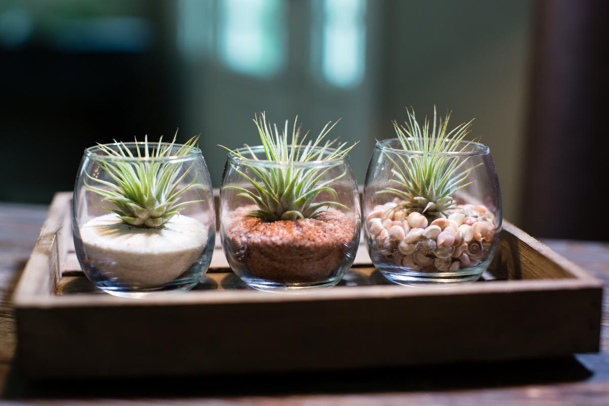 3 Pack Tiny Terrarium Kit - With Plants