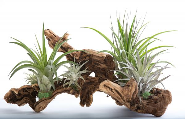Air Plant Grapevine Wood Arrangement - Large