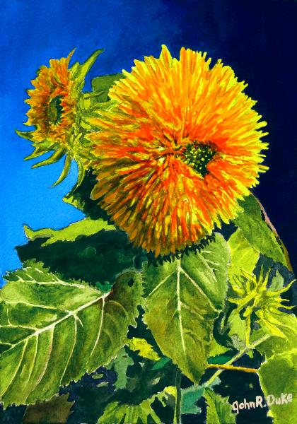 """Sunflower"" by John Duke"