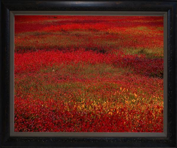 """Blueberry Fields"", 32""x40"" Framed photograph"