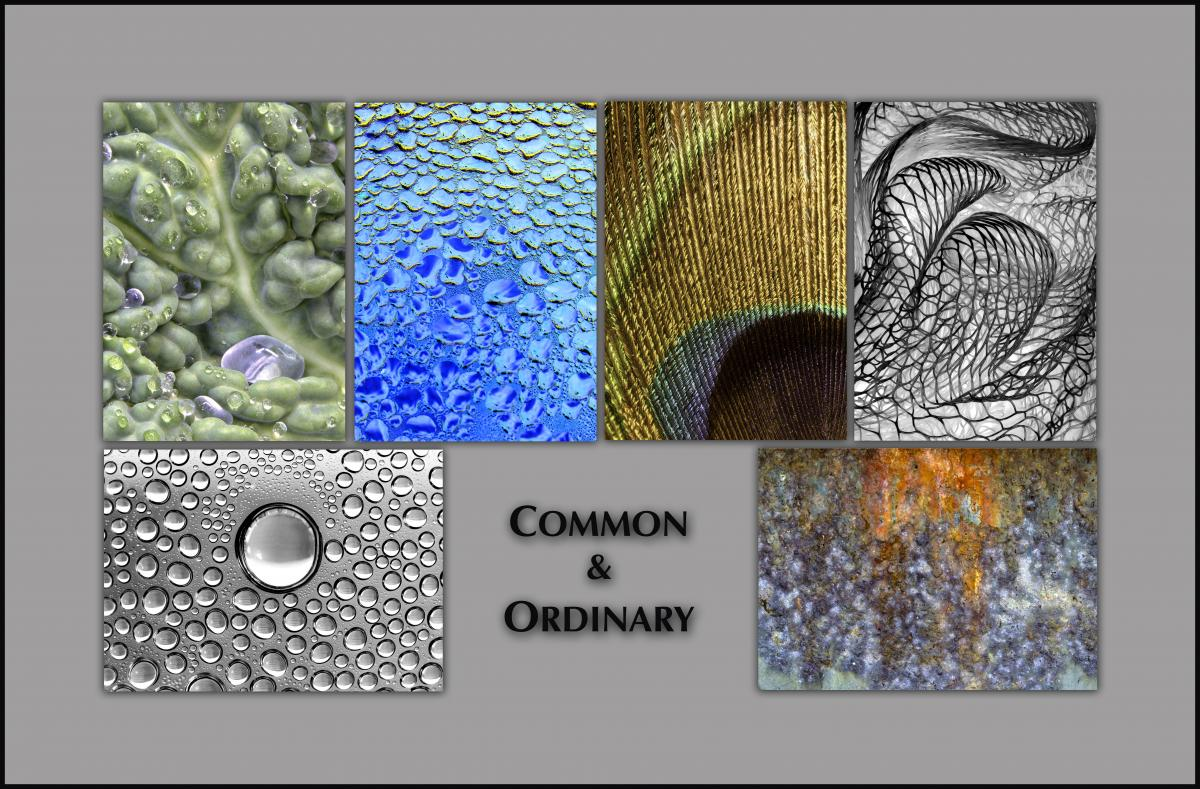 "NOTECARDS: ""Common & Ordinary""- boxed set of 6 different cards, each 5""x7"""