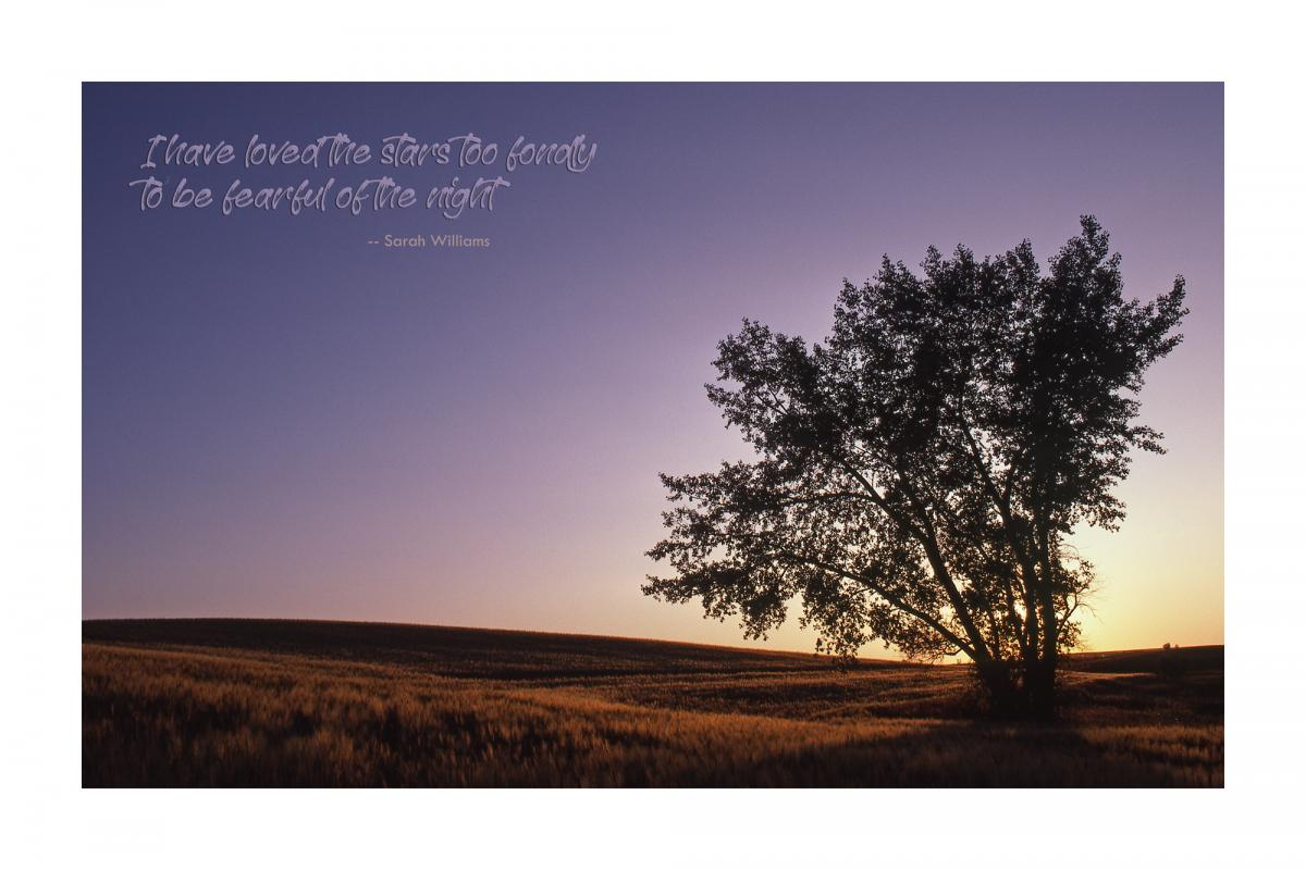 "POSTER: ""Solitary Tree at Sunset"" (Large)"