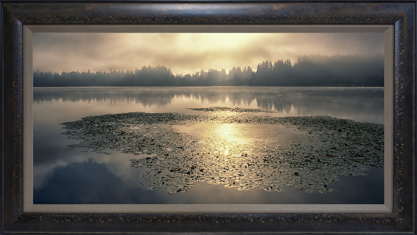 """Washington Lilypads"" 15""x30"" framed photograph"
