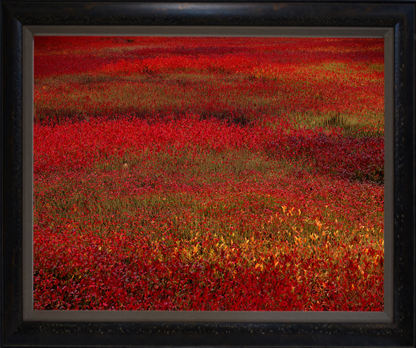 """Blueberry Fields"" 24"" x 30"" framed photograph"
