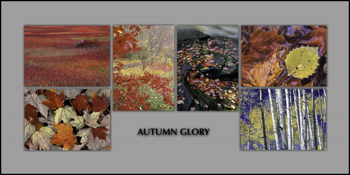 "NOTECARDS: ""Autumn Glory"" - boxed set of 6 different notecards, each 5""x7"""