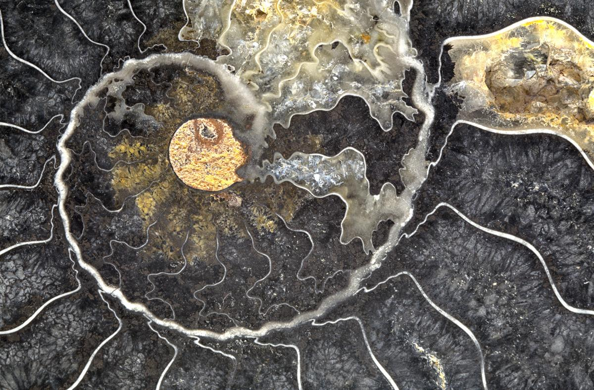 """Black Ammonite"", 18""x24"" gallery-wrap canvas"