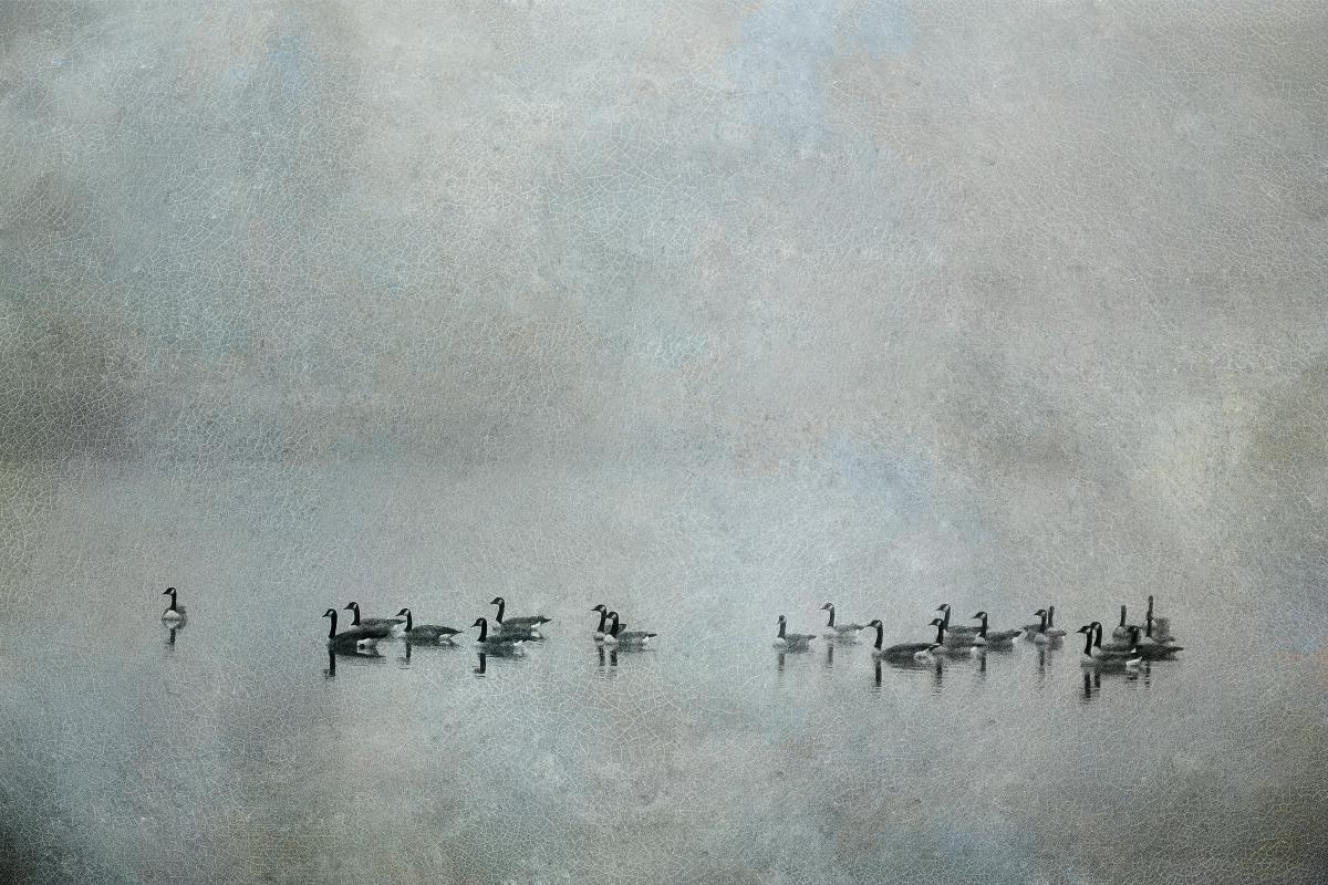 Geese in the Fog #2