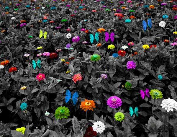 BW Colorful Meadow with Butterflies