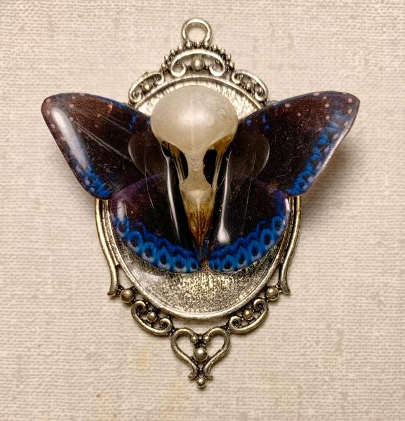 Black and blue butterfly with real bird skull pendant