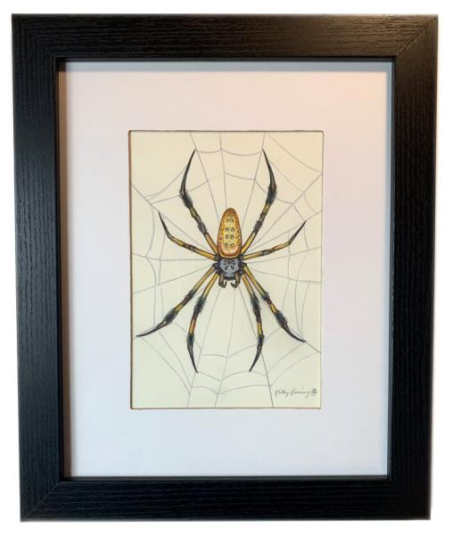 """Orb Weaver Spider"", Small Original 5 x 7 Color Pencil Art"