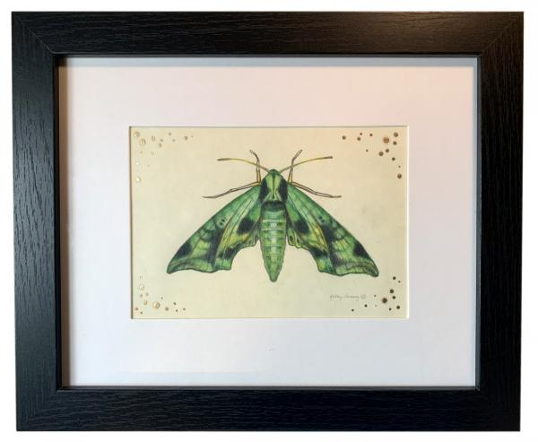 """Sphinx Moth"", Small Original Color Pencil Art"