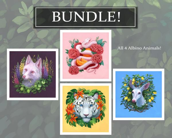 Albino Animals BUNDLE! Signed