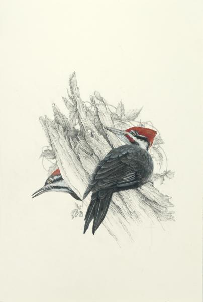 """Spring Flirtation"" - male and female pileated woodpeckers picture"