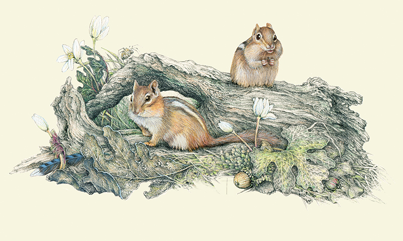 """April Chippies"" - a happy pair of chipmunks doing what chippies do!"