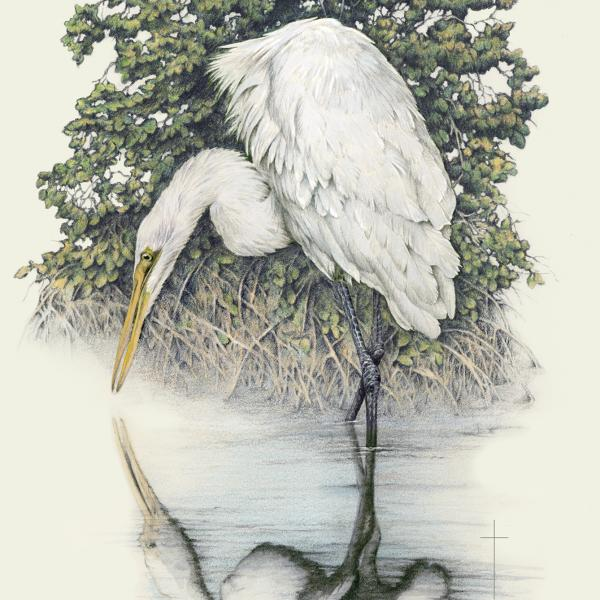 """Soul Searching"" - great white egret"