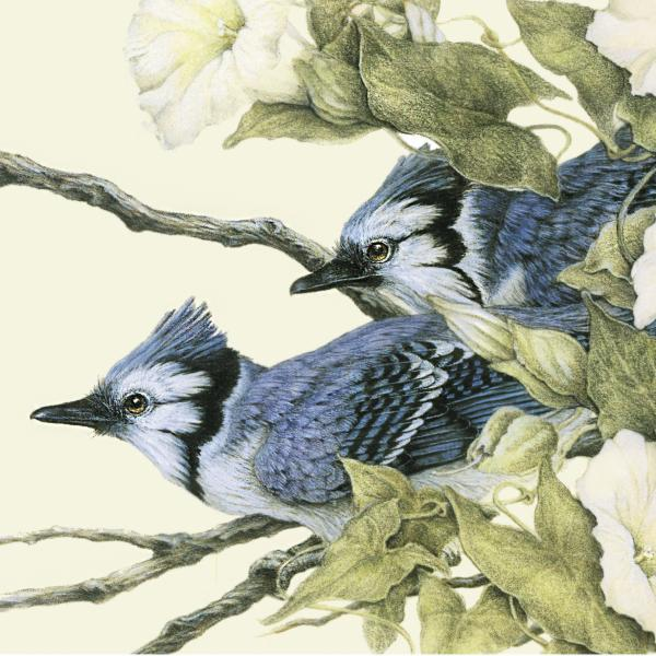 """Early Morning Jays"" - bluejays and morning glory"