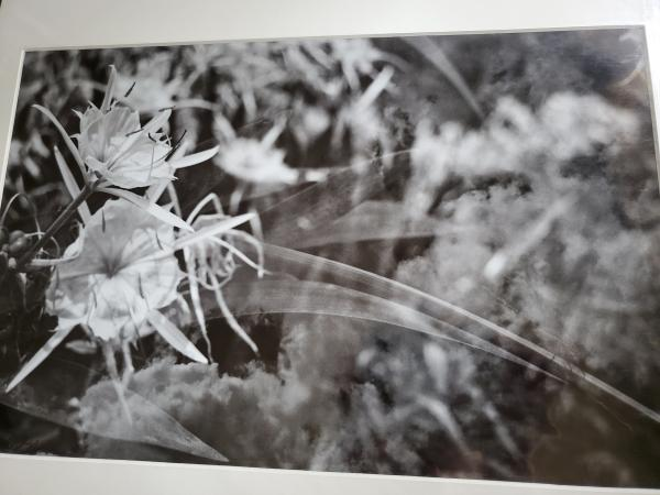 "14 x 18 Matted Print - ""Image of a Daydream"""