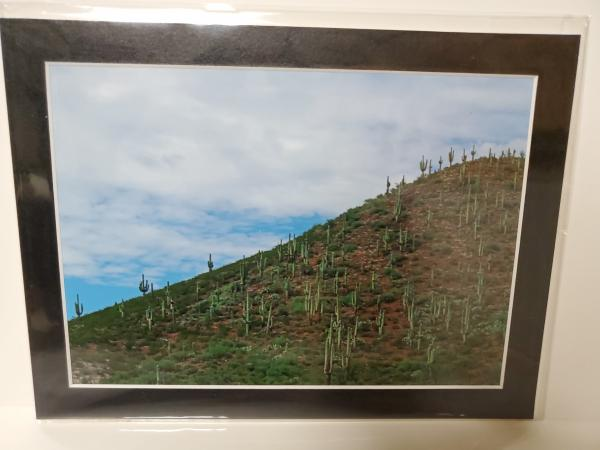 "9x12 Matted Print - ""Saguaro Hill"" picture"