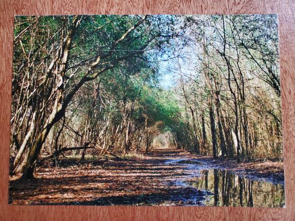 "Print on 9x12 wooden board - ""Forest Tunnel 1"""