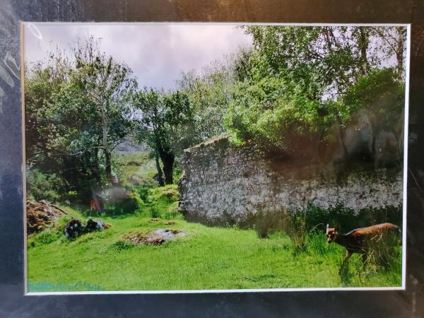 "9x12 Matted Print - ""Irish Deer 1"" picture"