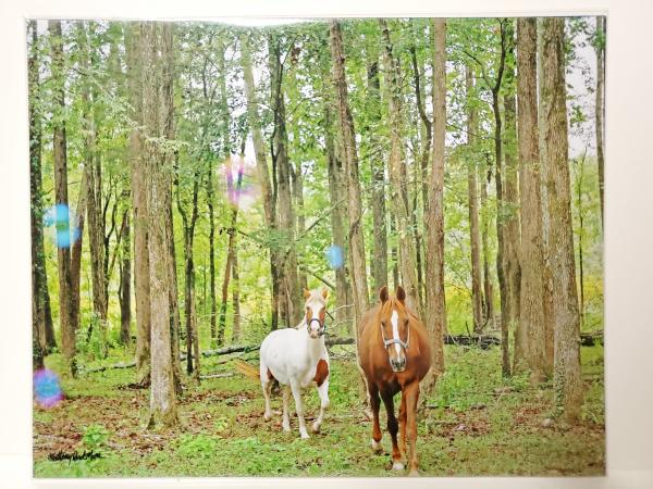 "8x10 Un-matted Print - ""Friends in the Forest"""