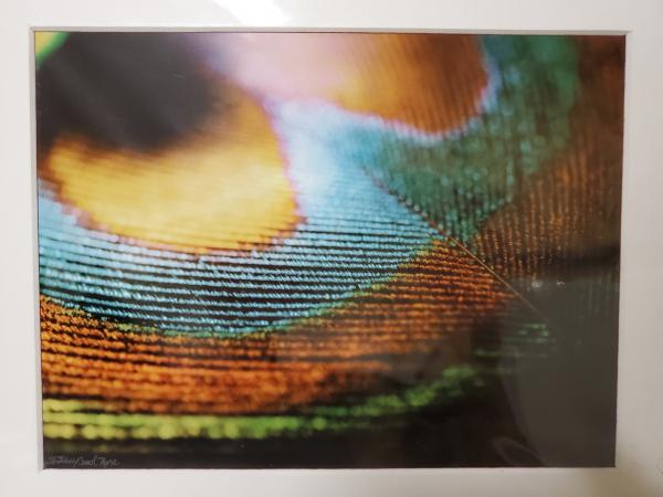 "8x10 Matted Print - ""Light Feather 1"" picture"