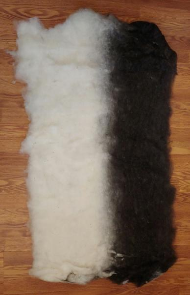17oz Half and Half Black and White Finnsheep and Alpaca Batt