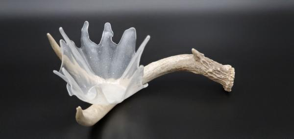Clear raindrop on antler