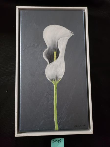 Calla lily on Gray