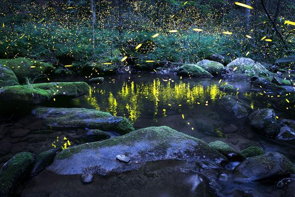 Reflections - Photo of fireflies, lightning bugs