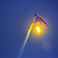 Firefly Experience - Photography by Radim Schreiber