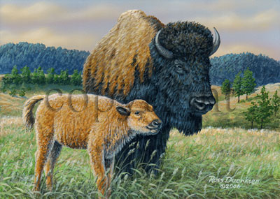 Buffalo with Calf - Giclee Canvas