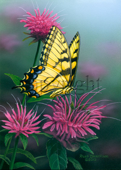 Tiger Swallowtail on Bee Balm - Canvas Giclee