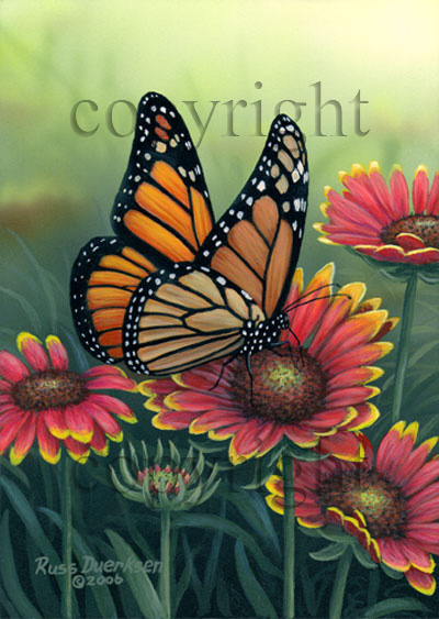 Monarch on Blanket Flower - Canvas Giclee
