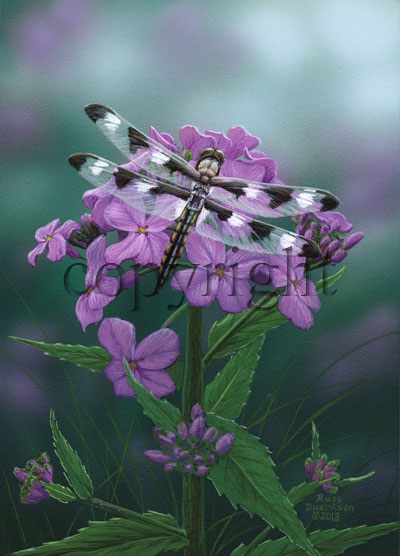 Twelve Spotted Skimmer - Giclee Canvas