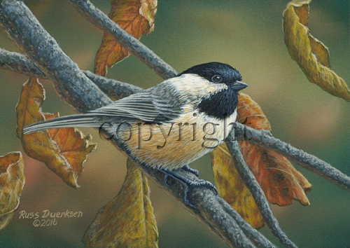 Chickadee in Autumn - Giclee Canvas