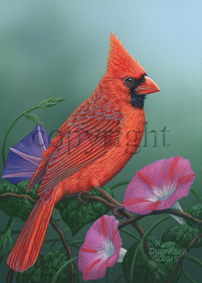 Cardinal on Morning Glories - Giclee Canvas