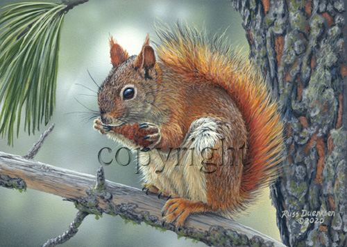 Red Squirrel - Giclee Canvas