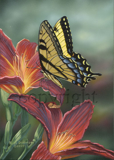 Tiger Swallowtail on Day Lily - Canvas Giclee