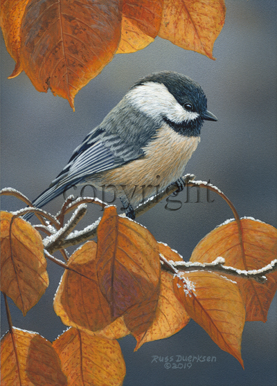 Black-capped Chickadee - Giclee Canvas
